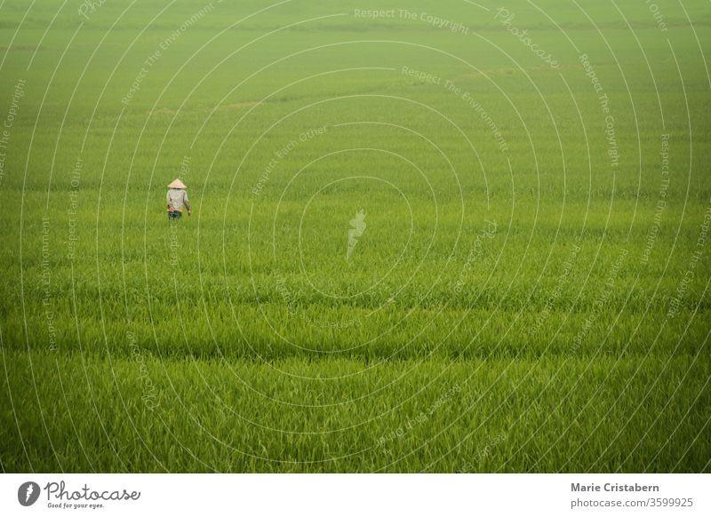 Ein Reisbauer, der durch den Nebel wanderte, bedeckte riesige Reisfelder in Ninh Binh, Vietnam ländliches leben in vietnam vietnamesische Landschaft