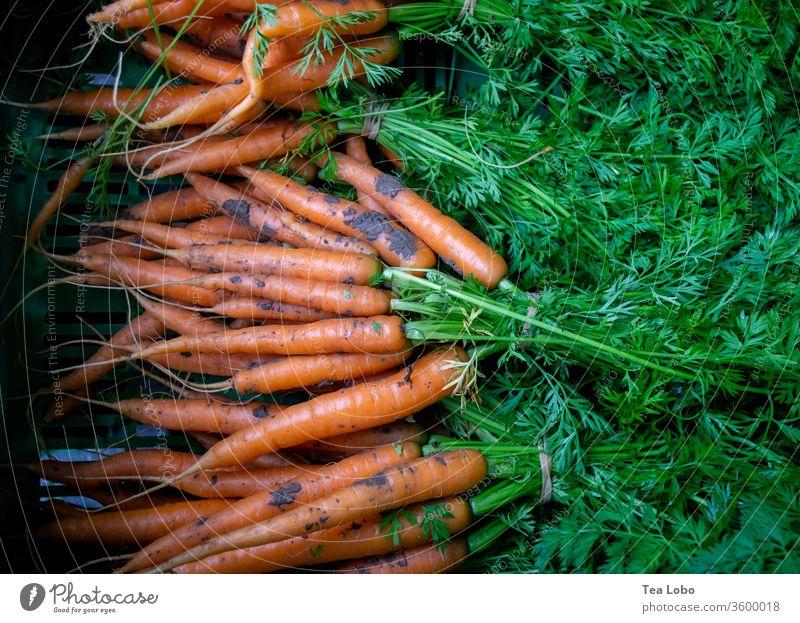 karotte Karotten Marktplatz Bioprodukte Gemüse Vegetarische Ernährung Vegane Ernährung Gesundheit lecker frisch Lebensmittel Essen Mittagessen Salatbeilage