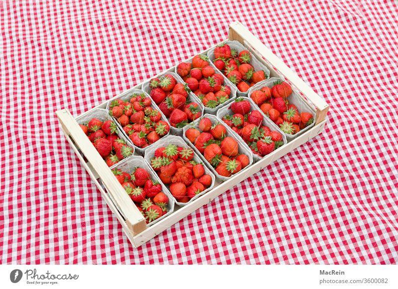 Erdbeeren auf einem karriertem Stofftuch erdbeeren kiste erdbeeren frucht frücht früchte frisch gepfückt obst rasen grün natur decke rot karriert niemand