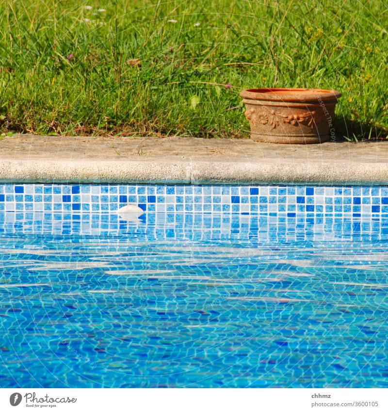 Topf am Pool Schwimmbad swimming pool Wasser Becken Keramik Gras Wiese Rand Übergang Beckenrand Schwimmen & Baden nass Blumentopf Fliesen u. Kacheln blau grün