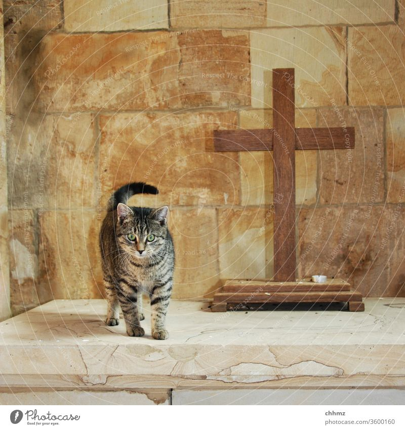 Kirchenkatze Katze Altar Kreuz Kapelle Kater Menschenleer Religion & Glaube Kerze Sandstein Christliches Kreuz Symbole & Metaphern neugierig Christentum