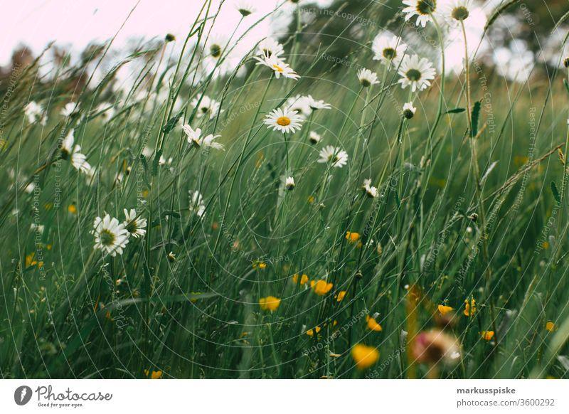 Wildblumen Blühwiese Blühstreifen Wiese Futter Gras Pflanzen Silage Landwirtschaft Grünland