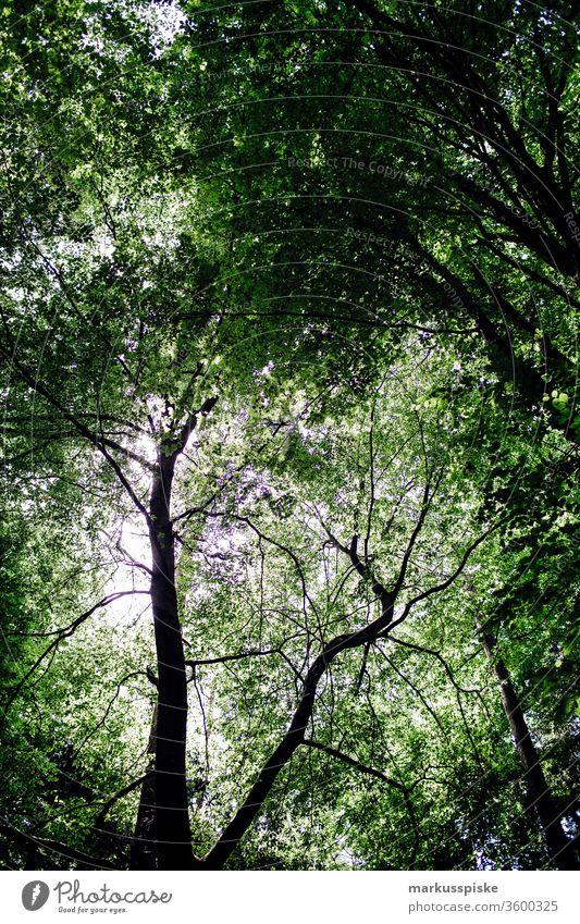 Wald Blätter Waldstimmung Äste und Zweige Blätterdach grün Naturschutzgebiet
