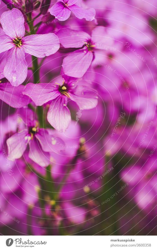 Wildblumen Blühwiese Blühstreifen Wiese Futter Gras Pflanzen Silage Landwirtschaft Grünland Regentropfen Blüte Blatt