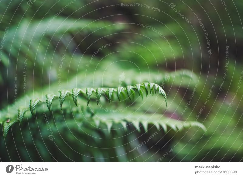 Wildblumen Blühwiese Blühstreifen Wiese Futter Gras Pflanzen Silage Landwirtschaft Grünland Blüte Blatt Farn Farnblatt Farnblätter Wildnis