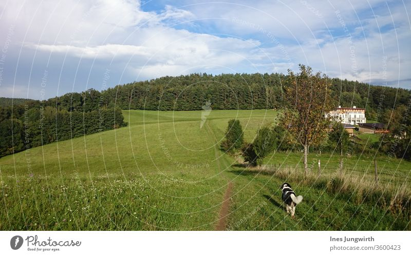 Gassi gehn Hund Gassi gehen Spaziergang Tier Haustier Blick kuschlig schön Fell Säugetier Tag Außenaufnahme Farbfoto Natur Landschaft Feld Bewegung