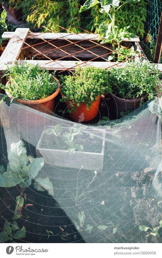 Bio Kräuter und Salat Hochbeet Garten Gemüse selbstversorgung Beet zwiebeln Frühlingszwieben Lauchzwiebeln Lauchgemüse bio anpflanzen Anpflanzung unabhängig