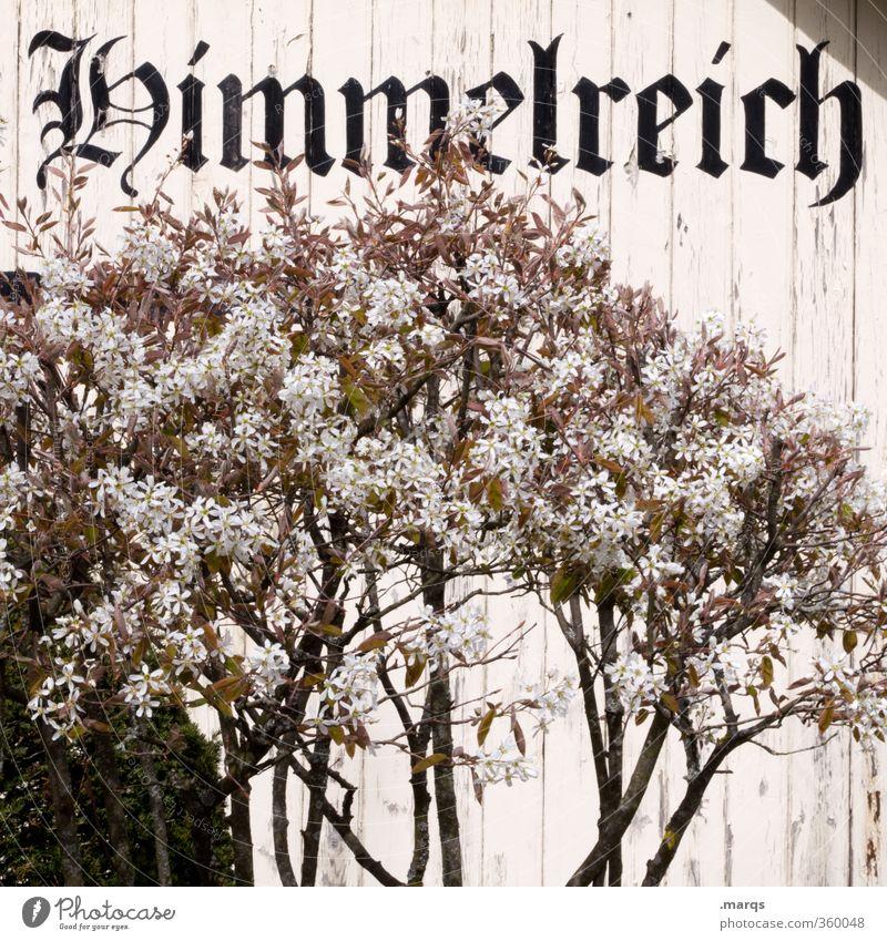 Ankunft Himmel (Jenseits) Pflanze Wand Tod Gefühle Mauer Holz Religion & Glaube oben außergewöhnlich Schriftzeichen ästhetisch Hoffnung Zeichen Ziel Frieden