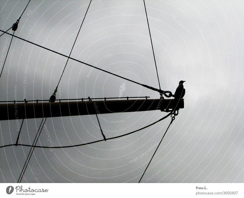 Zu gern wäre die Möve eine Gallionsfigur und so übte sie sich darin schon mal auf dem Klüverbaum des Segelschiffes. Vogel Himmel Hafen Elbe Museumsschiff
