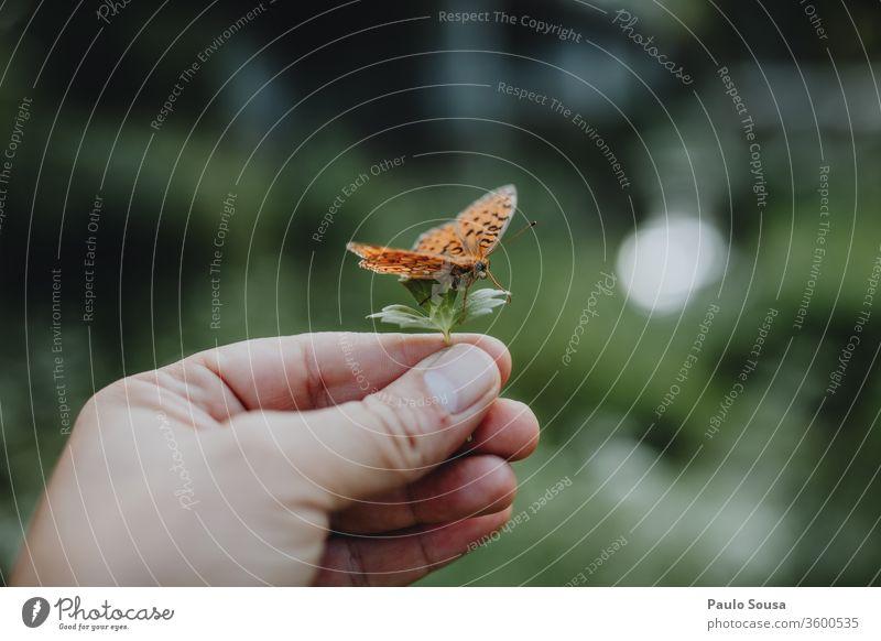 Blatthaltende Hand mit Schmetterling Schmetterlinge Natur zerbrechlich Zerbrechlichkeit Umwelt Insekt Nahaufnahme Tier Farbfoto Tag Wildtier Flügel Butter-Vlies