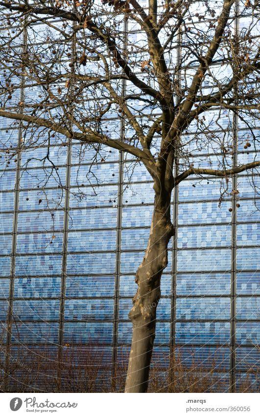 Öko Energiewirtschaft High-Tech Erneuerbare Energie Solarzelle ökologisch Umwelt Natur Baum Fassade Zeichen Fortschritt Umweltschutz Zukunft Sonnenenergie
