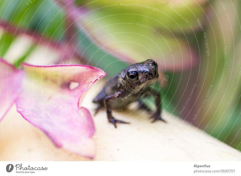 Kaulquappe von gestern Frosch Froschperspektive Tier Makroaufnahme Natur Nahaufnahme Umwelt Kröte Farbfoto Außenaufnahme Menschenleer Froschkönig Wildtier