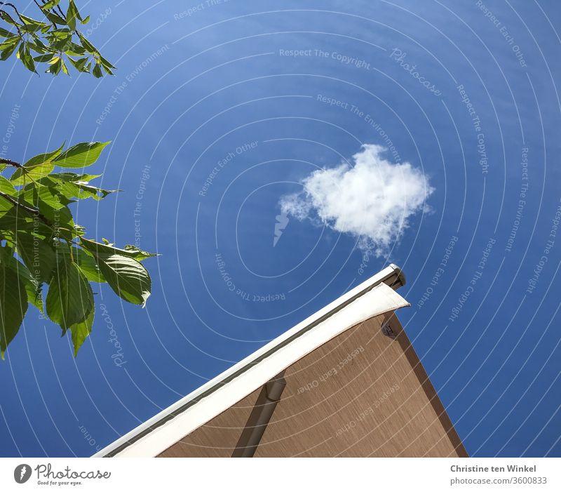 Blick in den blauen Sommerhimmel mit einem weißen Wölkchen, grünem Laub und heller Markise blauer Himmel Wolke Laubbaum grünes Laub Zierkirsche