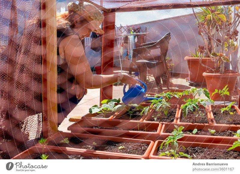 Rothaarige Frau mit Strohhut bei der Pflege ihres Stadtgartens, geschützt durch ein Netz auf der Terrasse des Hauses grün Topf arbeiten Tomaten Frühling