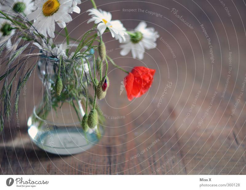 Bauernstrauß Sommer Blume Frühling Blüte Häusliches Leben Dekoration & Verzierung Tisch Blühend Mohn Duft ländlich Margerite Vase verblüht Wiesenblume Mohnblüte
