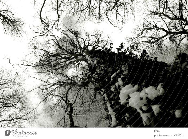 inside Natur Himmel Baum Wolken Leben Schnee hoch Ast Gefäße dominant umzingeln