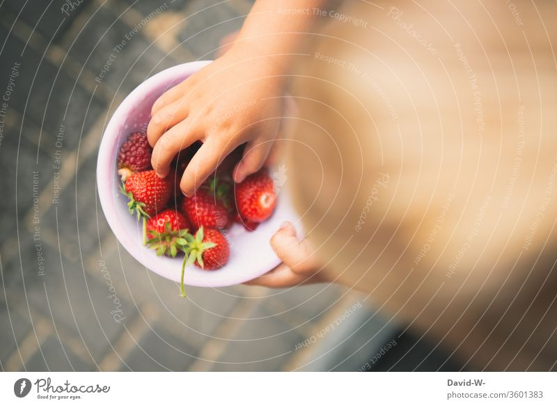 Beeren aus dem eigenen Garten gesammelt Mädchen Schälchen Schale Erdbeeren fruchtig rot lecker gesund vitamine garten Frucht frisch Lebensmittel Farbfoto Sommer