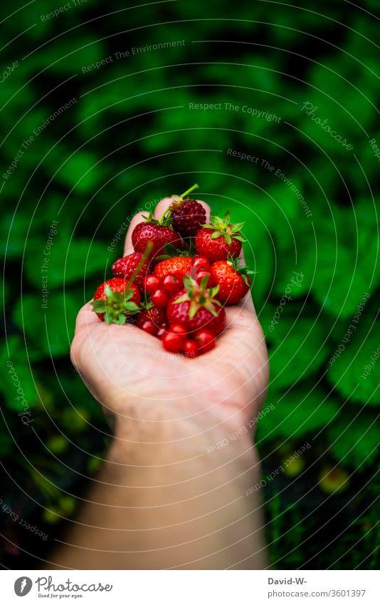 verschiedene rote Obstsorten in einer Hand Erdbeerzeit Frucht Vogelperspektive Hintergrund neutral Starke Tiefenschärfe obstsorten Beerenfrucht schön ästhetisch