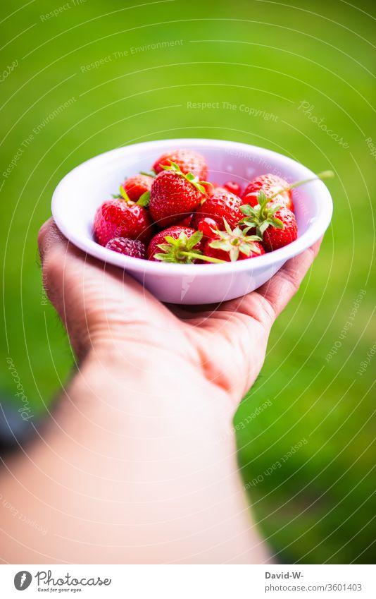 ein kleines Schälchen mit roten Beeren wird von einer Hand gehalten Erdbeerzeit Frucht Vogelperspektive Hintergrund neutral Starke Tiefenschärfe obstsorten