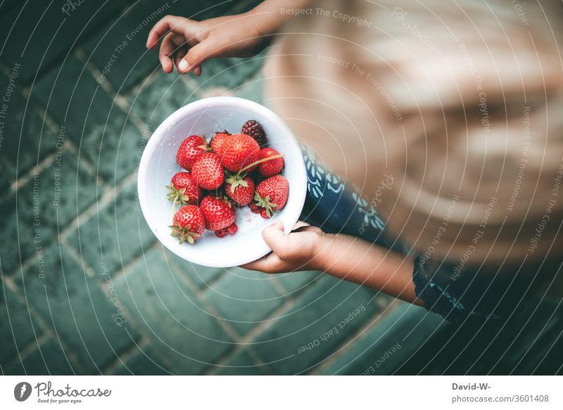ein Schälchen mit roten Beeren selbst gesammelt Mädchen Schale Erdbeeren fruchtig lecker gesund vitamine garten Frucht frisch Lebensmittel Farbfoto Sommer süß
