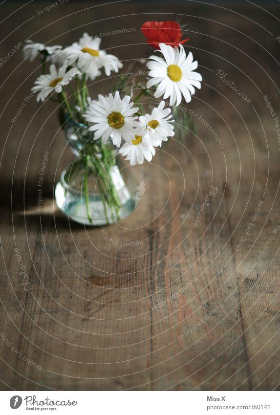 Landblumen Sommer Blume Frühling Blüte Hintergrundbild Dekoration & Verzierung Tisch Blühend Mohn Duft ländlich Margerite Vase verblüht Holztisch Wiesenblume