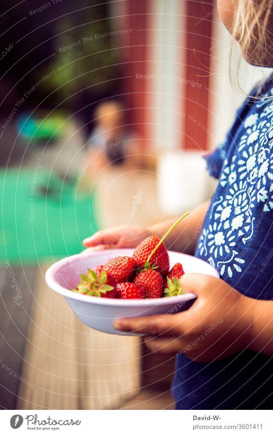 Erdbeerzeit - ein kleines Mädchen hält eine Schale mit Erbeeren in den Händen Schälchen Erdbeeren fruchtig rot lecker gesund vitamine garten Frucht frisch