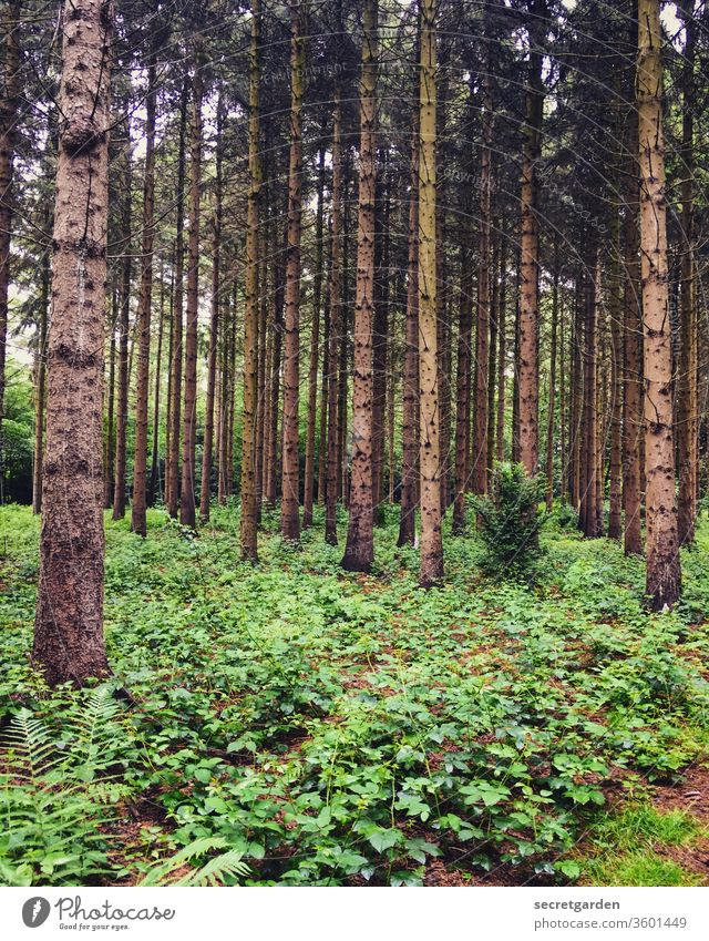 Man sieht nur mit dem Herzen gut. Das Wesentliche ist für die Augen unsichtbar. Wald Waldlichtung Waldboden Waldspaziergang Waldstimmung Waldsterben Tannenbaum