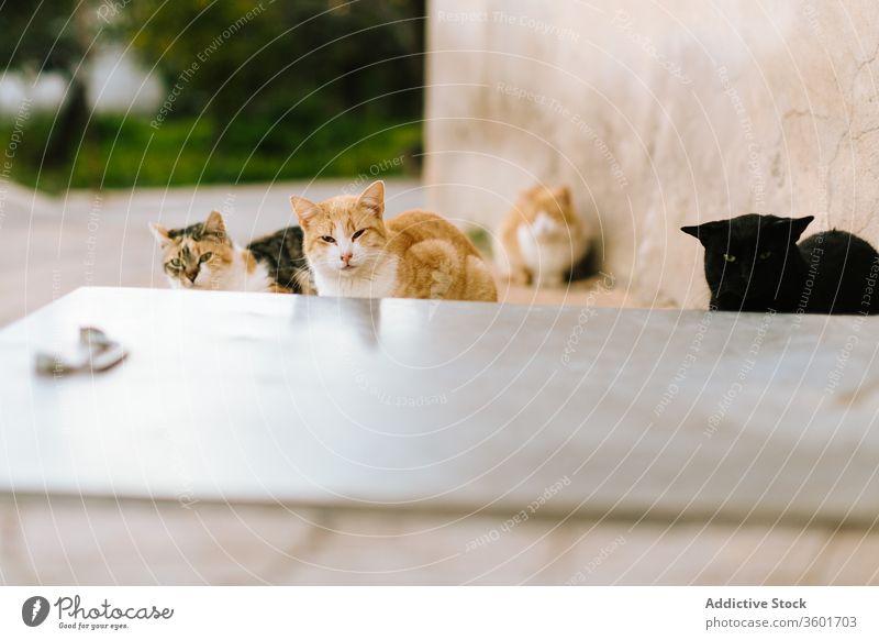 Streunende Katzen auf der Straße in der Stadt Irrläufer heimatlos alt Gebäude Großstadt Fell Eckstoß Stein Tier Haustier einsam Säugetier katzenhaft traurig