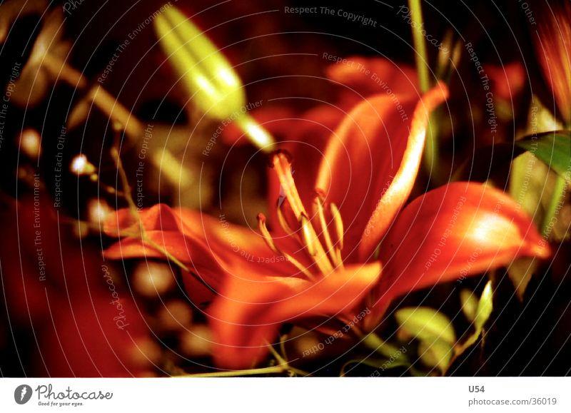 Aufblühen Blume Pflanze Frühling Blüte Blühend aufwachen Natur Farbe Lust