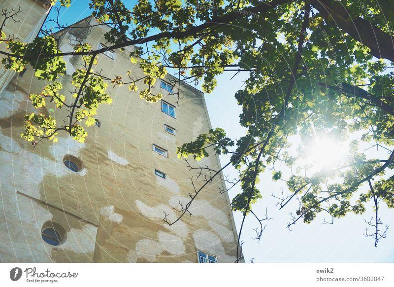 Alter Turm Wien alt historisch Bauwerk Fassade Außenaufnahme Architektur Gebäude Menschenleer Farbfoto Haus Stadt Altstadt Tag Stadtzentrum Baum Sonne