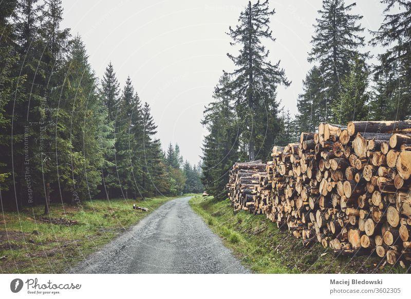 Baumstämme stapeln sich an einem nebligen Regentag an einer Straße im Wald. Nebel Totholz Haufen Nutzholz Kofferraum Forstwirtschaft Industrie Holz Stapel