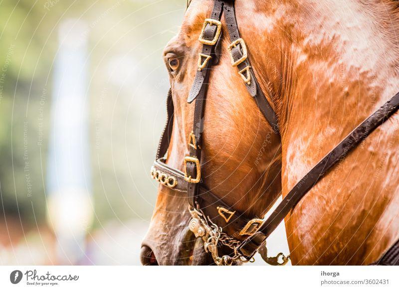 Porträt eines Pferdes auf der Außenseite Blick niemand Erwachsener Tier Hintergrund schön Schönheit braun Nahaufnahme Farbe niedlich Reiterin pferdeähnlich Auge