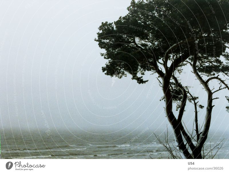 Küstennebel Wasser Baum Winter Strand Sand Wellen Küste Wind Sturm Ostsee