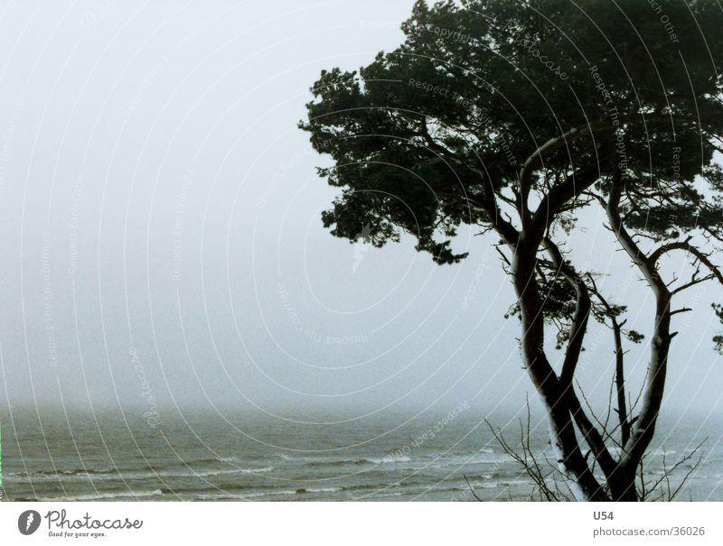 Küstennebel Winter Sturm Baum Strand Wellen Ostsee Wind Sand Wasser