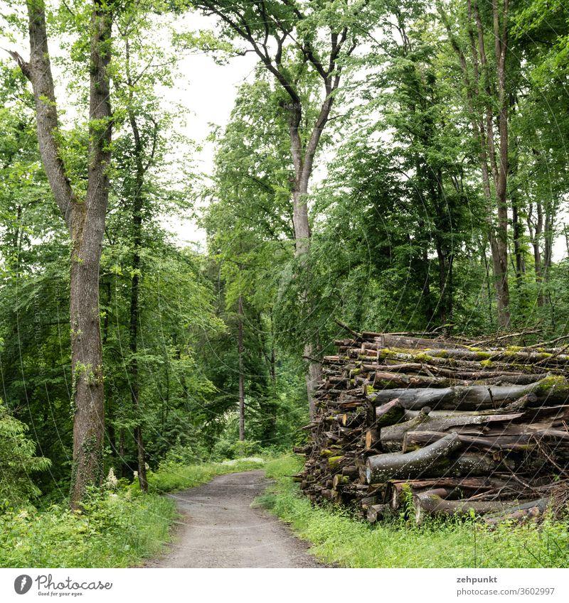 Ein Waldweg, auf der einen Seite flankiert von einem Baum auf der anderen von einem Stapel gefällter Bäume Holzstapel gefällte bäume gefällter baum Weg ins Bild