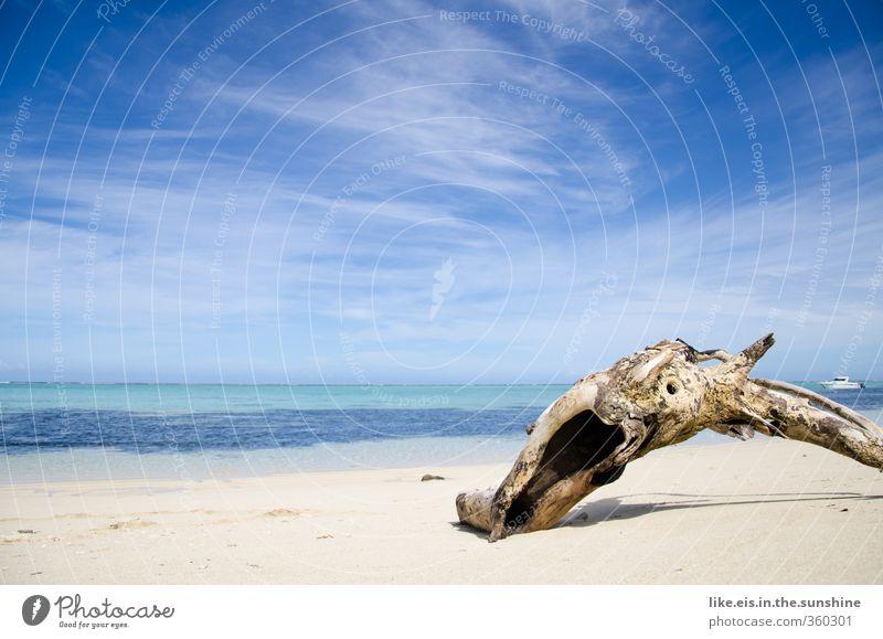 strand- GUT Natur Ferien & Urlaub & Reisen Sommer Baum Meer Erholung Einsamkeit Landschaft ruhig Strand Umwelt Ferne Küste Wasserfahrzeug Horizont Wellen