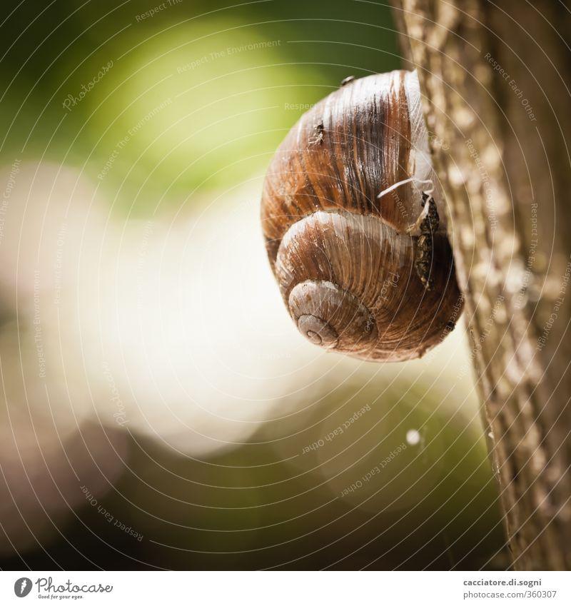 straight up grün Baum Einsamkeit Tier Wärme Frühling klein hell braun Kraft Schönes Wetter hoch Abenteuer einfach rund Freundlichkeit