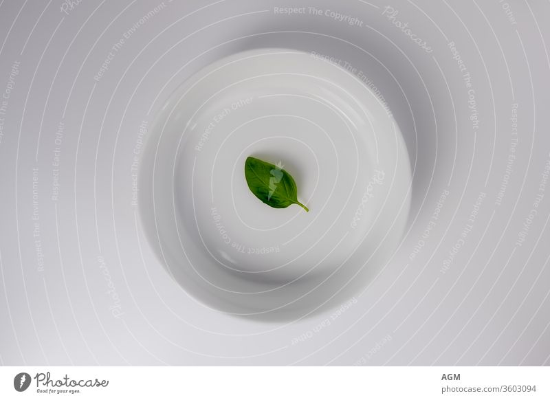 weiße Schale mit Basilikumblatt Lebensmittel aromatisch Hintergrund Biografie Nahaufnahme Küche kulinarisch lecker Speise Geschmack frisch Frische grün Wachstum