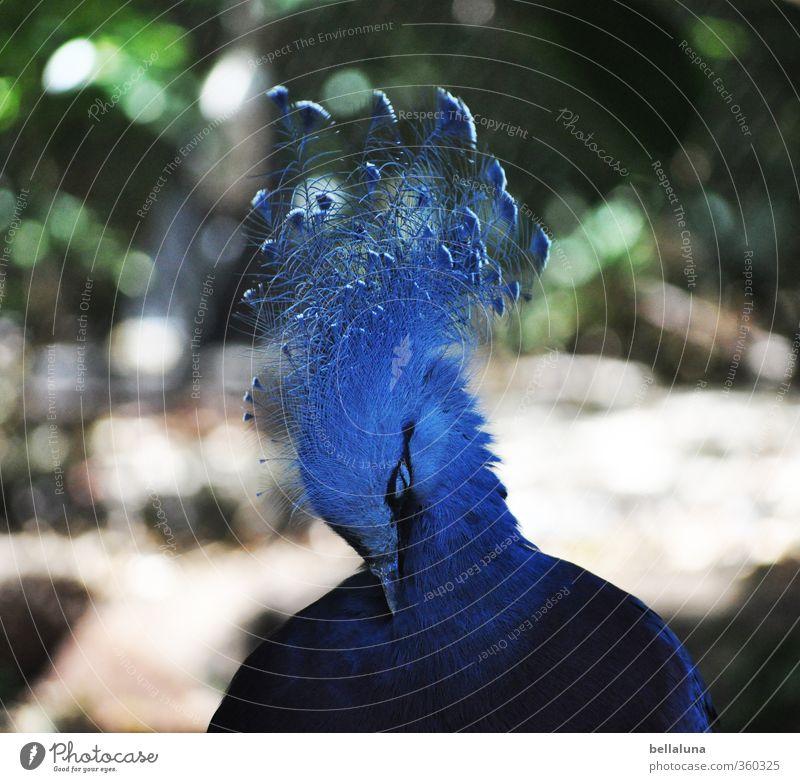 Diva Natur blau grün weiß Pflanze Sommer Tier schwarz Umwelt Frühling Vogel Park sitzen Wildtier Schönes Wetter Sträucher