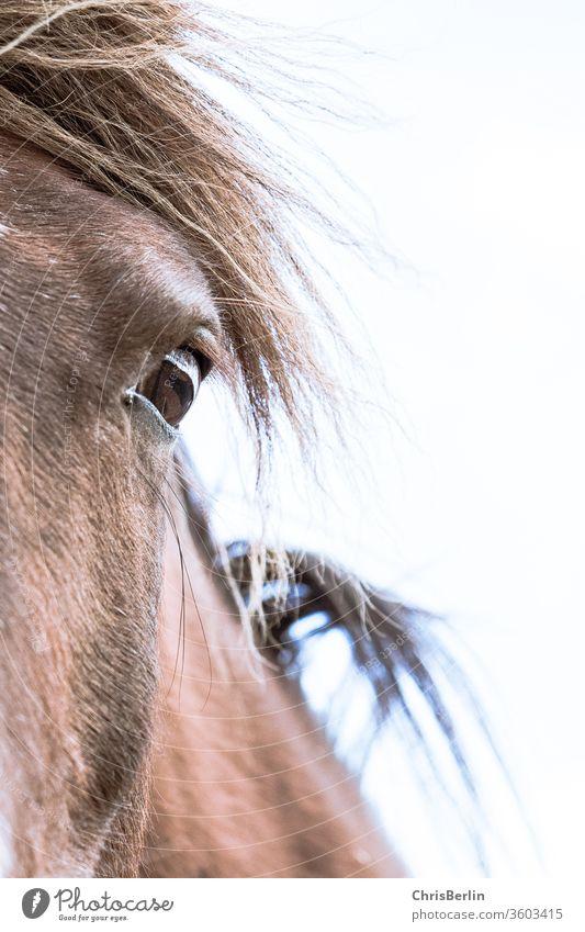 Pferdeauge Tierauge braun Mähne Pferdekopf Natur