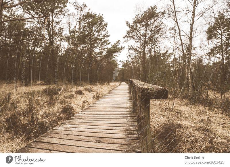 Holzsteg im Moor Steg Naturschutzgebiet Herbst Naturerlebnis wandern Bohlenweg