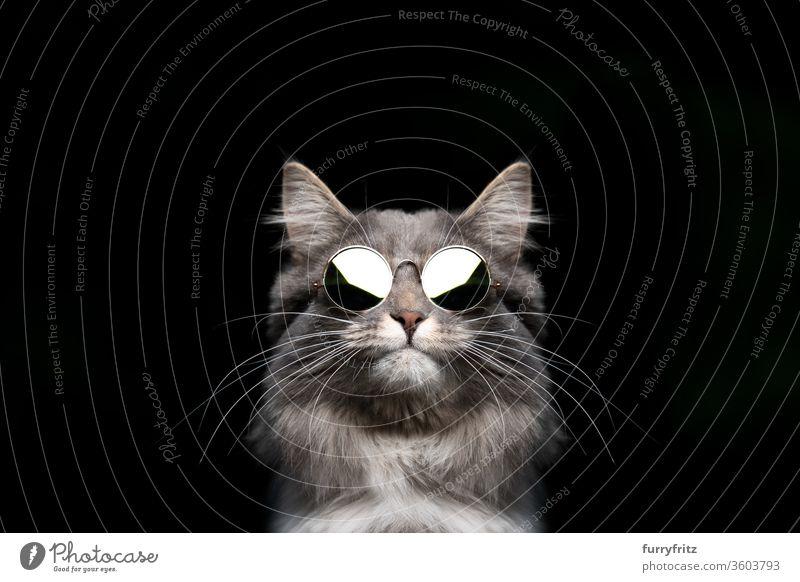 coole maine coon katze mit runder sonnenbrille Katze Haustiere Rassekatze Studioaufnahme schwarzer Hintergrund Textfreiraum ausschneiden schön niedlich