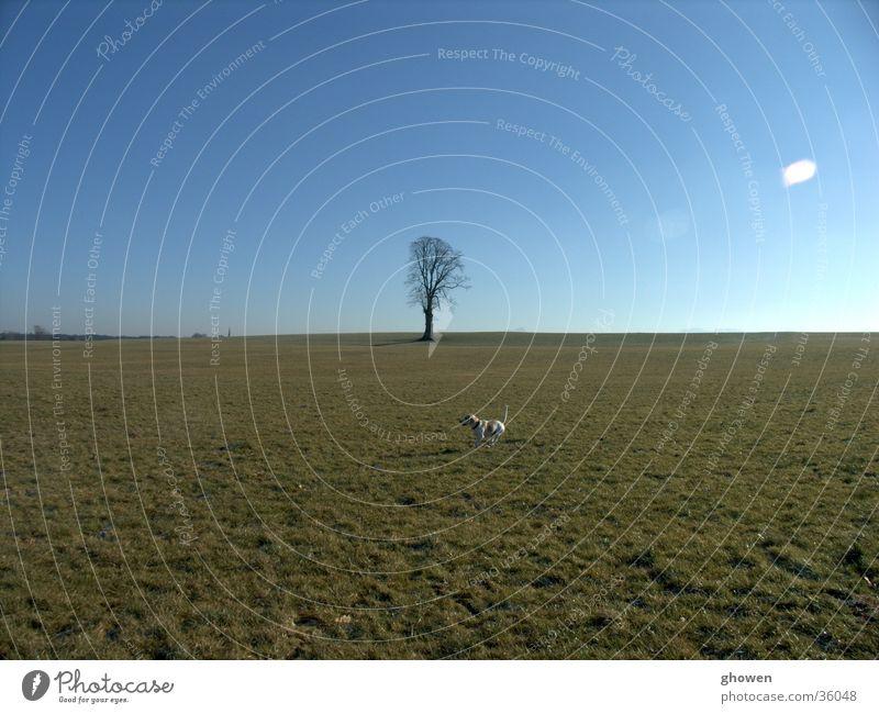 Beagle vor Baum Himmel Winter Wiese Hund