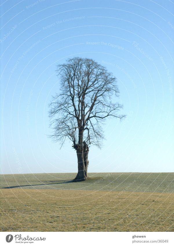 Baum vor Himmel Wiese Baum. Winter Ast