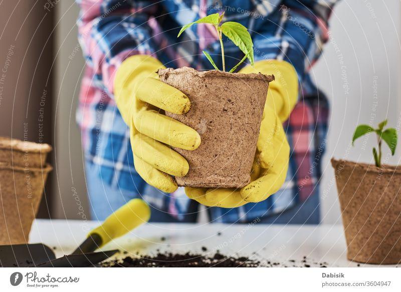 Frauenhände in gelben Handschuhen bei der Transplantation von Pflanzen. Konzept der Pflanzenpflege Pflege natürlich Natur wachsen Gartenarbeit Topf Blatt Boden