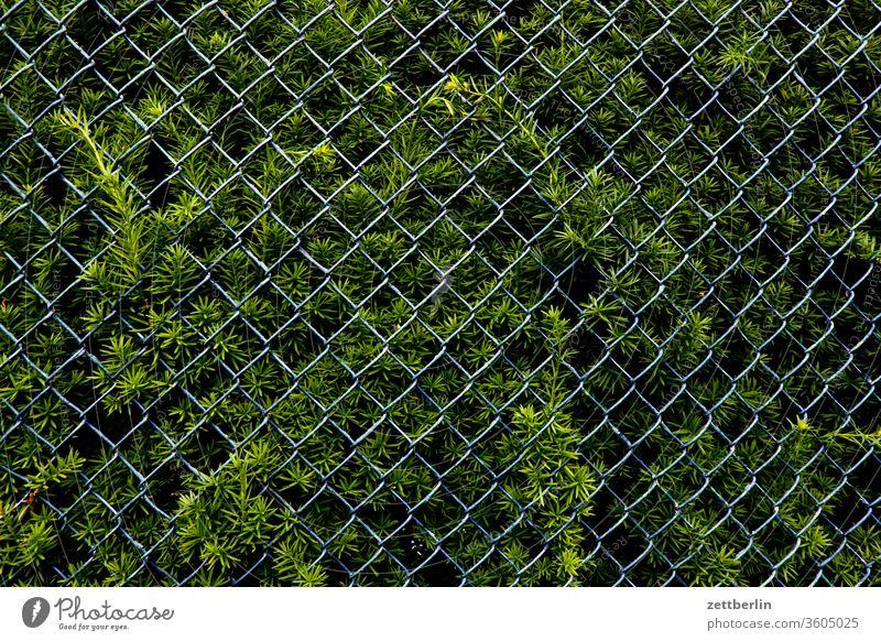 Thuja mit Maschendrahtzaun ast erholung garten kleingarten kleingartenkolonie menschenleer natur pflanze ruhe schrebergarten strauch textfreiraum thuja hecke