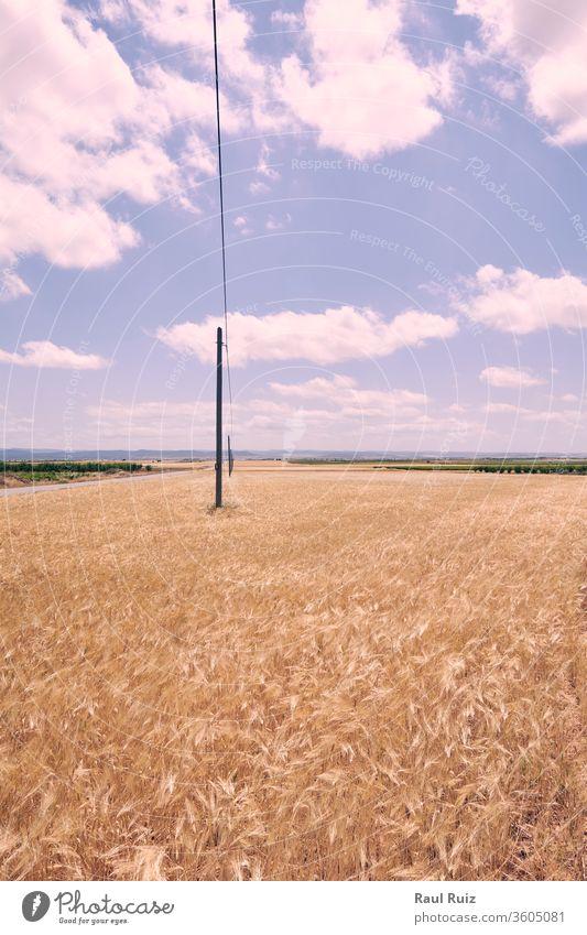 Weizenfelder vor der Ernte in der Sonne gebadet gelb gold Samen Sommer Landschaft ländlich Müsli Feld Korn verschwommen Flora Brot Herbst Sonnenlicht im Freien