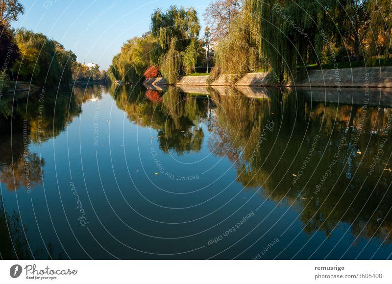 Ein Blick auf den Fluss Bega am frühen Morgen. Bunte Weidenbäume im Herbst 2015 Rumänien Timisoara Architektur schön Großstadt Stadtbild Tag grün Wahrzeichen