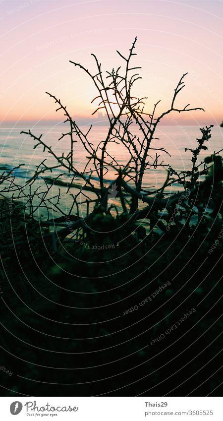 Sonnenuntergang Abend dunkel Meeresufer Strand Horizont Landschaft Blick durch Baumsilhouette Natur MEER Himmel Ansicht reisen Urlaub Wasser schön Hintergrund