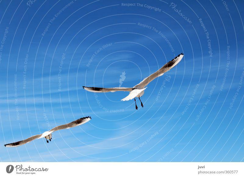 As Birds Flying Himmel Natur Ferien & Urlaub & Reisen blau schön weiß Sommer Tier schwarz Umwelt Bewegung Freiheit Glück oben hell Luft
